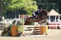 Beautiful, Expressive Reg\'d TB Gelding Hunter Prospect