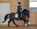 Sweet energetic Canadian/Thoroughbred mare