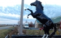 Life-Like Horse Statues, for Equestrian center Entrances
