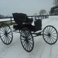 Harness and carriage for sale