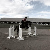 Gorgeous 12 year old 16.3hh Canadian Warmblood