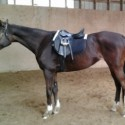 Versatile quiet talented jumper mare for sale/lease in st lazare