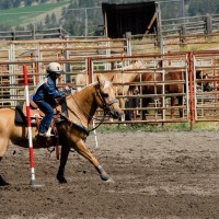 16 year old AQHA all-around mare. KID SAFE!