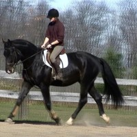 Experienced A Circuit Jumper with potential to excel in Dressage and Eventing