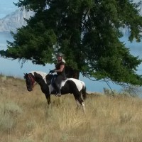 Horse boarding offered in Summerland, BC Canada