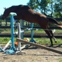 Jumper Prospect For The BIG Ring!