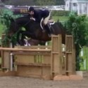 Hunter/Jumper Schoolmaster