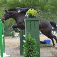 A Circuit Hunter/Jumper - Classy and Experienced - Amateur Friendly -  For Sale or Paid Lease