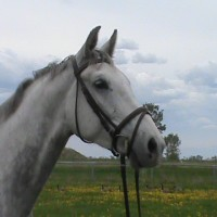 GORGEOUS Hunter Prospect - offered for sale by breeder