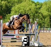 Tiny Dancer aka Arya 8yo 16.3hh Bay TB Mare - Jumper