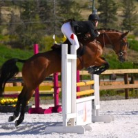 Competitive 15'3 Eventer, Bold, Quick & Careful!