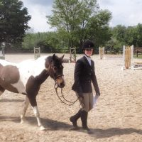 Pony Jumper or Eventing Prospect for Sale