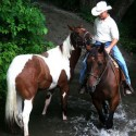 Riding and driving training for all breeds and types of horses!