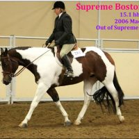 Western Horses for Sale or Lease