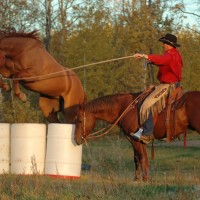 Natural Horsemanship with Glenn Stewart in Smithers BC
