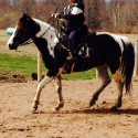 5 yr old Flashy Chestnut Tobiano Registered Paint Mare