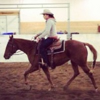 Quality Horse Training Available