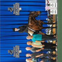 AQHA All-Around Gelding - The Cost Is Divine