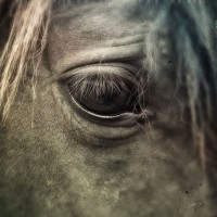 Equine Health and Emergency First Aid Course