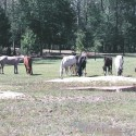 "Retire to ""Sunny\"" South Carolina . A Nature Lovers Paradise on a 37 acre Horse Farm $524,700"