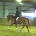 Dressage/Jump Dream! with Outstanding Lineage