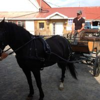 CANADIAN MARE THAT LOVES TO DRIVE & RIDE!