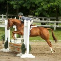 fancy 14.1 large pony mare for sale or lease