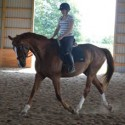 Tall Trakehner gelding For Sale