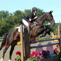 Flashy Prelim Packer For Sale