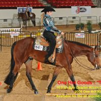 Western Horses for Lease & Sale