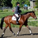 **New Videos** Stunning 2002 Canadian Warmblood Mare For Sale