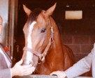 E.P. Taylor (left) with Northern Dancer and trainer Horatio Luro, Courtesy of Jefferson Mappin, Windfields Farm Photo © Winant Bros. Inc
