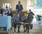 Dinner was delivered to guests by pony-drawn carriage at the 'Dressage Soiree' fundraising event held June 21 at the CDI3* Equivents in Cedar Valley, ON. Almost $10,000 was raised in support of the Canadian Dressage Athlete Assistant Program (C-DAAP). Photo by Mary White, Lone Oak Equine Photography