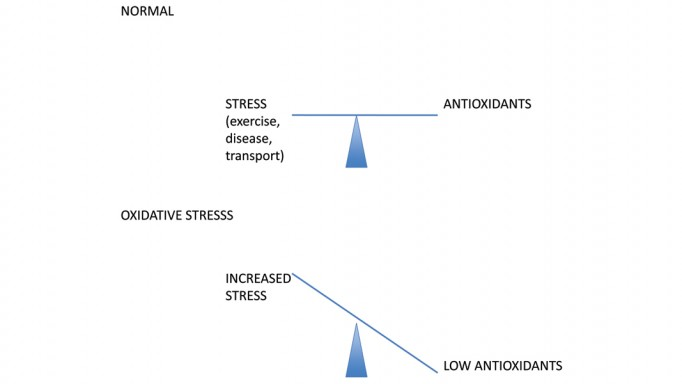 Thumbnail for The Role of Antioxidants in Equine Nutrition