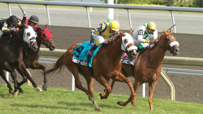 Thumbnail for 2011 Sovereign Awards: Champion Three-Year-Old Male Pender Harbour