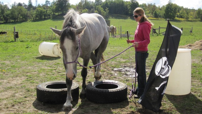 Thumbnail for Bombproof Your Horse Part 5: Putting it to the Test