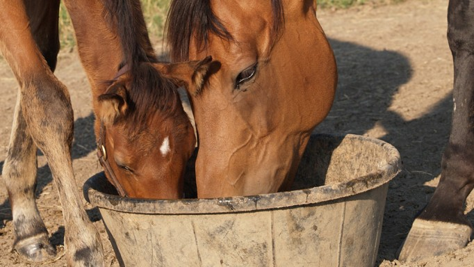 Thumbnail for Feeding for Healthy Foals
