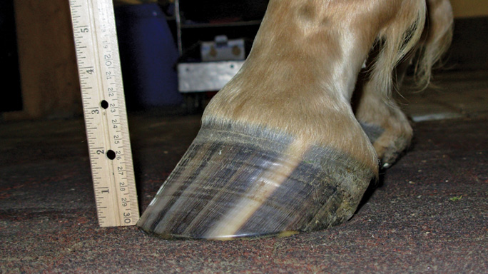 Thumbnail for Maintaining Healthy Hooves for Life