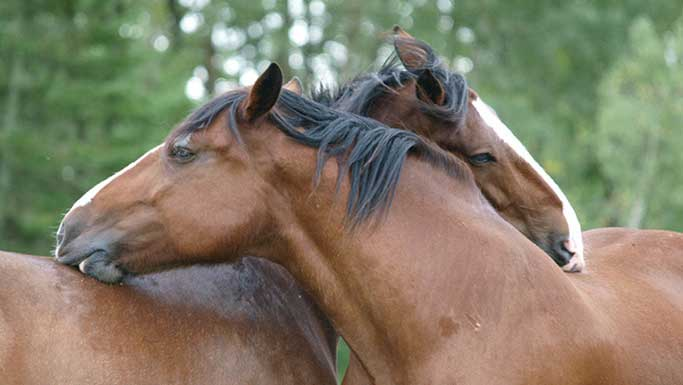 Thumbnail for Decoding Equine Emotions