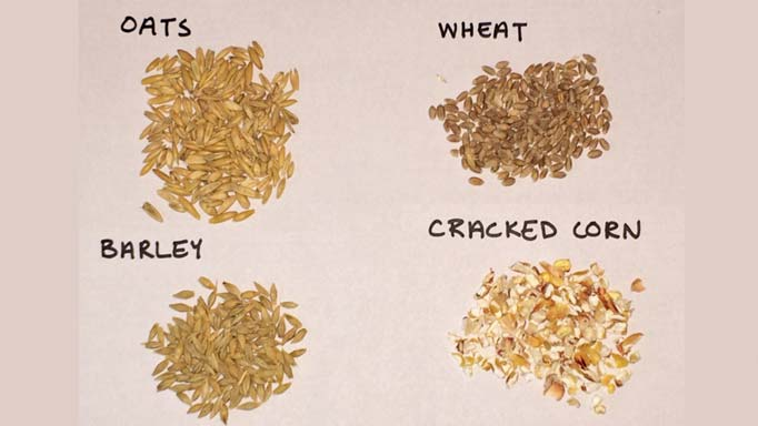Thumbnail for Cereal Grains vs Commercial Mixes