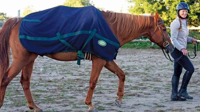 Thumbnail for How to Cool Down your Horse