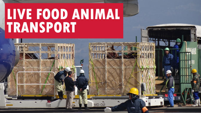 Thumbnail for Live Food Animal Transport