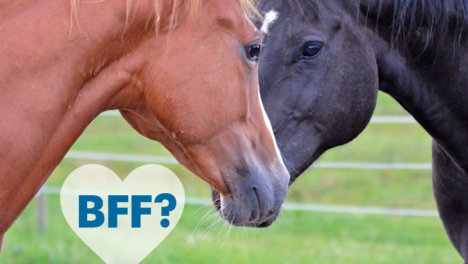 Thumbnail for Emotional Rescue: Exploring Love & Loss in Equines