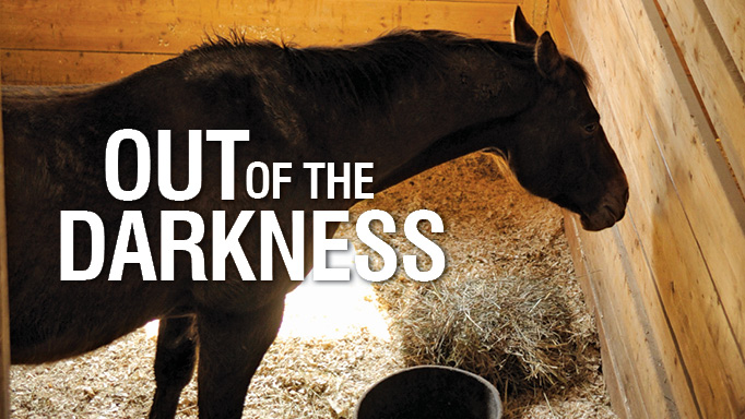 Thumbnail for Out of the Darkness