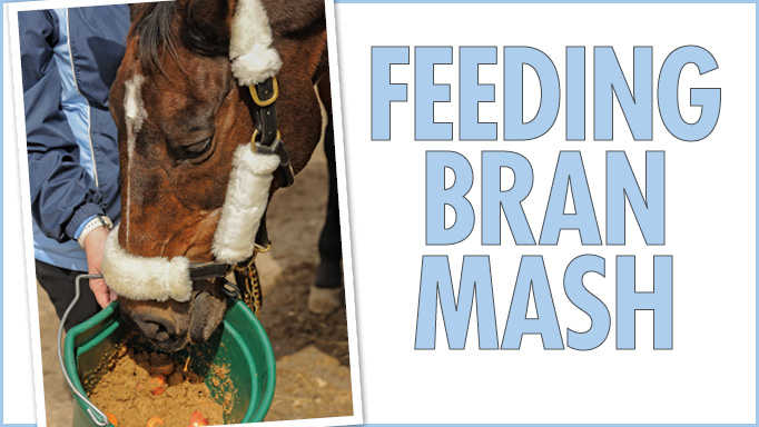 Thumbnail for Should I Feed Bran Mash as a Winter Treat?