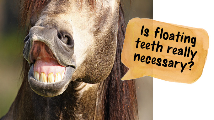 Thumbnail for Is Floating My Horse's Teeth Really Necessary?