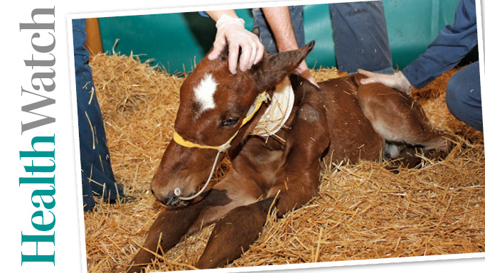 Thumbnail for Saving the Septic Foal
