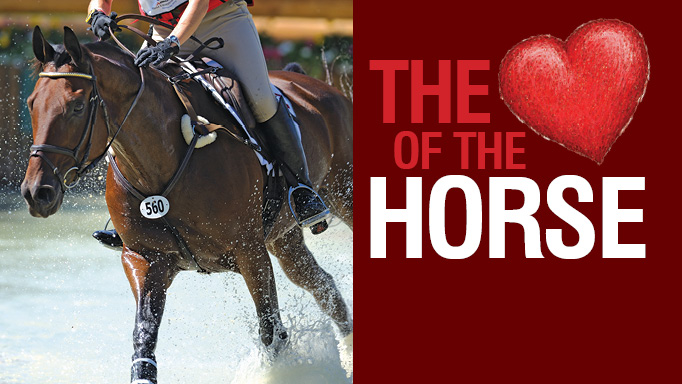 Thumbnail for The Heart of the Horse