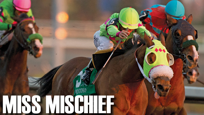 Thumbnail for Champion Older Female & Female Sprinter: Miss Mischief