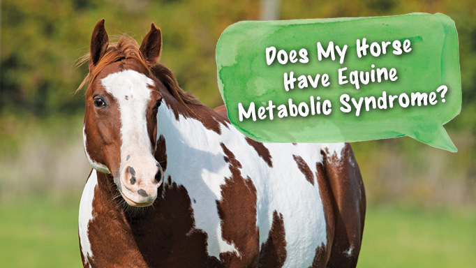 Thumbnail for Does My horse have Equine Metabolic Syndrome?